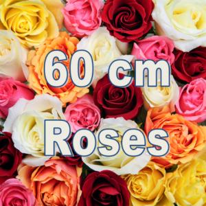 assorted-roses-150-stems-60-cm