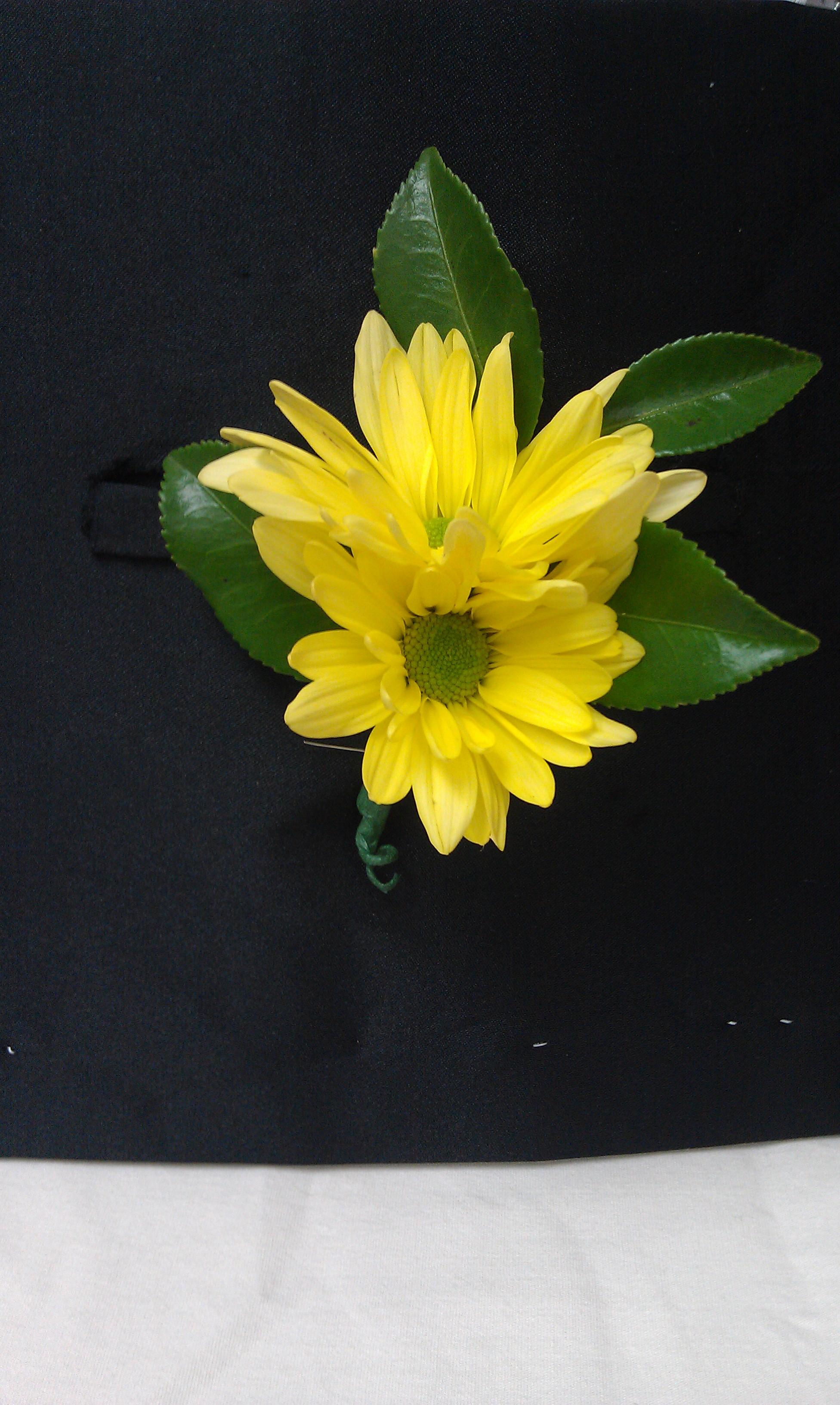 Yellow Daisy Boutonniere   Upstate Flower Market   1952 x 3264 jpeg 1312kB