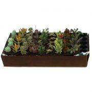 3 succulent plant